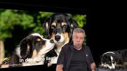 Die goldenen Regeln der Hundeführung